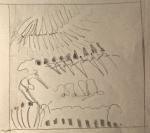 Jardin des plantes, muséum, galerie de paléontologie, grande galerie, dromadaire, dessiner les animaux, dessiner les éléphants,