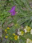 jardin alpin,cours de dessin,cours d'aquarelle,dessiner la nature