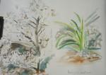 dessiner la flore, dessiner les fleurs, cours de dessin, dessin en extérieur, dessiner au Muséeum, cours d'aquarelle,