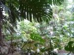 serres tropicales, serres du jardin des plantes, dessiner la nature, cours de dessin, dessiner au muséum,