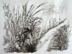 l'Arnon, dessiner la campagne, stage de dessin peinture,dessiner la nature,dessiner c'est voir,technique de dessin,technique d'aquarelle,dessiner au bord de la rivière