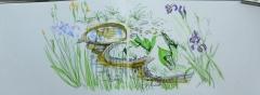 dessiner la nature, dessiner les fleurs, cours de dessin, jardin des plantes, les serres tropicales