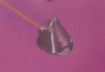 météorites,exposition,muséum,couleurs,dessiner les pierres