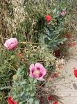 Lundi 16 juin 2020 le jardin  (2).jpg