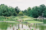 parc floral Vincennes, dessiner la nature,