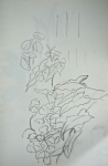 dessin, encre de chine, dessiner les plantes, muséum,