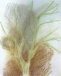 jardin des plantes, dessiner la nature, dessiner la végétation, couleur,