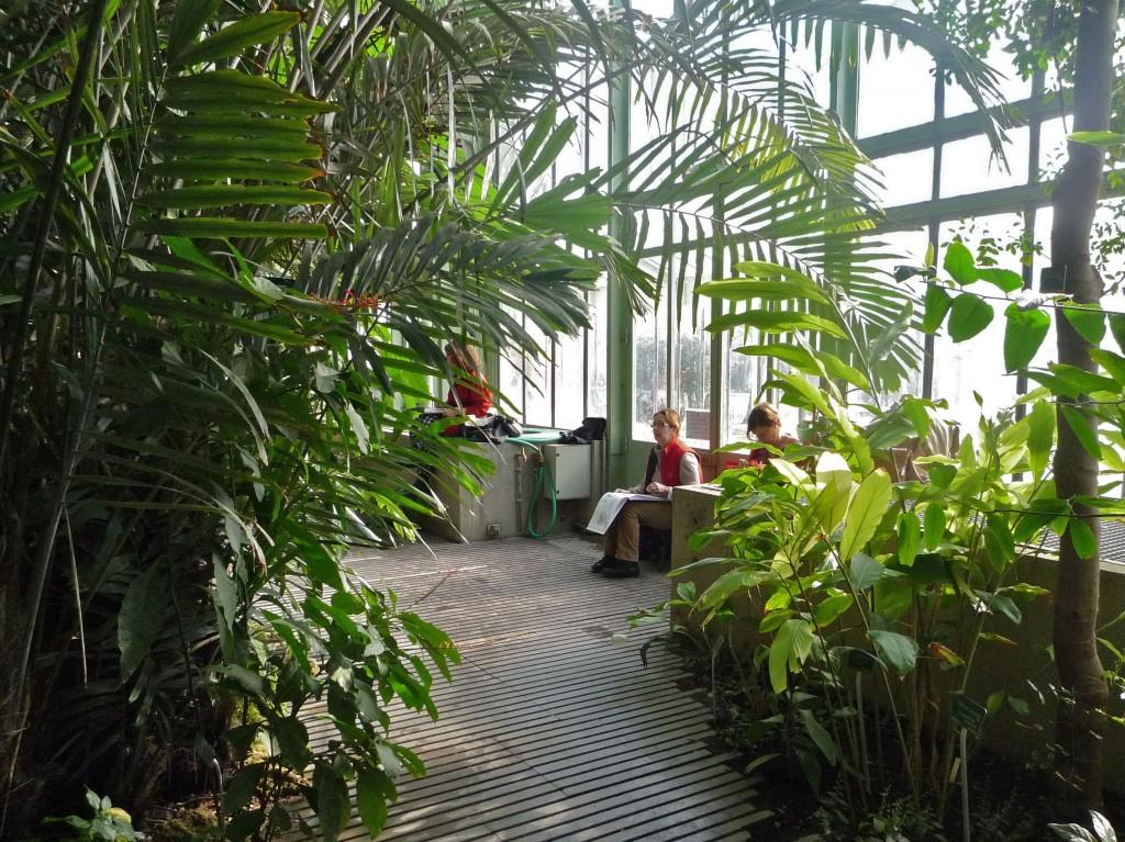 Dans les serres du jardin des plantes maj couleur for Les plantes du jardin