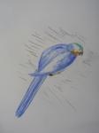 M.2014:10:?? Muriel oiseaux - 6.jpg
