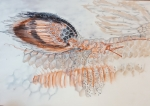 exposition océan,dessienr au muséum,jardin des plantes,cours de dessin,dessiner d'après réel,dessiner sur le motif
