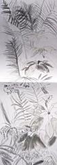 muséum du jardin des plantes, serres tropicales, dessiner les plantes, croquis,