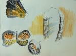 grande galerie de l'évolution,muséum,singe,papillon,girafe,couleur,exercice de couleur,cours de dessin