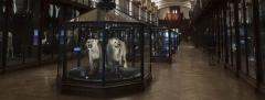 34 galerie des espéces menacées ou disparues.jpg
