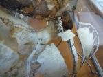 dessin de tortue, ménagerie du jardin des plantes, galerie de paléontologie, galerie d'anatomie comparée