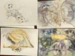 muséum, jardin des plantes, galerie de paléontologie, dessin, fossile, anatomie comparée, patrimoine français