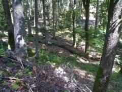 0 stage Trois épis - 05:07:16 bien installées - 3 forêt.jpg