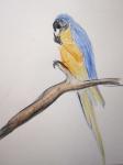 croquis,dessin,dessiner les oiseaux,aquarelle