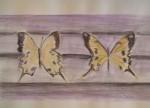 papillons, inspiration, croquis, couleur, dessin, Paris,