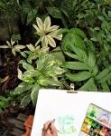 cours de dessin,dessiner,muséum,jardin des plantes,dessiner la nature,cours de dessin à paris