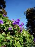 muséum,jardin des plantes,jardin botanique,dessiner les plantes