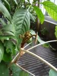 jardin des plantes, dessin, croquis, aquarelle, cours de dessin, cours d'aquarelle, peidre les fleurs,