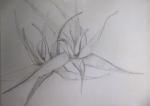 dessiner la nature,dessiner les fleurs,cours de dessin,jardin des plantes,les serres tropicales