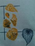 Muséum, jardin des plantes, jardin botanique, dessiner les plantes,