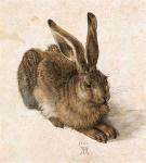 aquarelle Albert Durer, lapin, aquarelle,histoire de l'aquarelle,technique d'aquarelle,le geste du pinceau