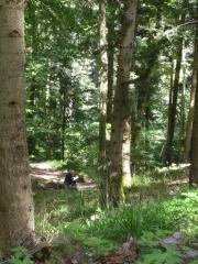 0 stage Trois épis - 05:07:16 bien installées - 4 forêt .jpg