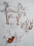animaux sauvage,ménagerie du jardin des plantes,zoo,flamant rose,dessin d'animaux,stage de dessin,muséum du jardin des plantes