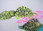 dessin de tortue, tortues rayonnantes