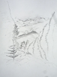 villa rosa, dessiner le paysage, dessiner la forêt,