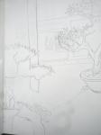 les serres du jardin des plantes, dessiner la nature, dessiner la flore, jardin alpin, parc floral de Vincennes, pard de Belleville,