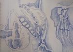 dessin de tortue,ménagerie du jardin des plantes,galerie de paléontologie,galerie d'anatomie comparée
