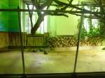 tortues rayonnées - plusieurs- - 01.jpg