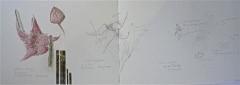 serres du jardin des plantes, dessin documentaires, les cactées, cactus, dessin au crayon