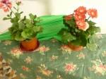 Micheline 1er juin fleurs - 1.jpg