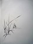 jardin alpin, cours de dessin, cours d'aquarelle, dessiner la nature,