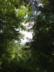 villa rosa,dessiner le paysage,dessiner la forêt