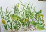 dessiner au jardin des plantes, dessiner la nature, dessiner les fleurs, cours de dessin,