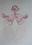 M.2014:11:03 Maud tortue - 1.jpg
