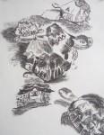 tortue, tortue rayonnée, croquis, dessin, atelier de dessin peinture, jardin des plantes.